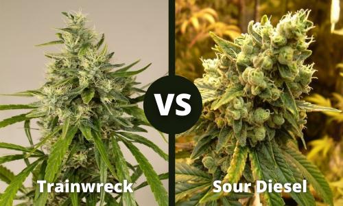 trainwreck vs sour diesel