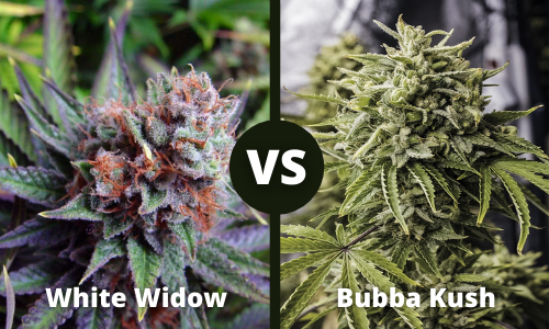 white widow vs bubba kush