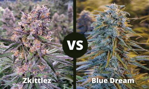 zkittlez vs blue dream