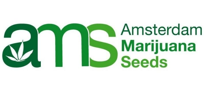 about amsterdam marijuana eeds