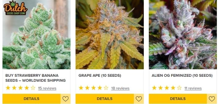 dutch seeds shop strains