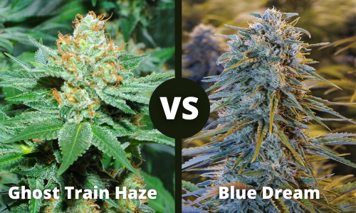 ghost train haze vs blue dream
