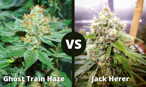 Ghost Train Haze vs Jack Herer