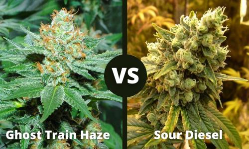 Ghost Train Haze vs Sour Diesel