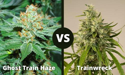 ghost train haze vs trainwreck