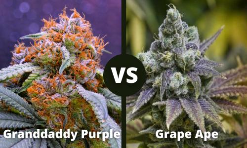 Granddaddy Purple vs Grape Ape