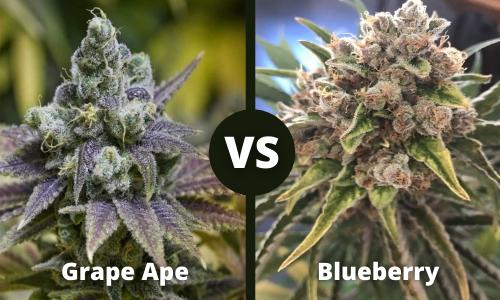 Grape Ape vs Blueberry