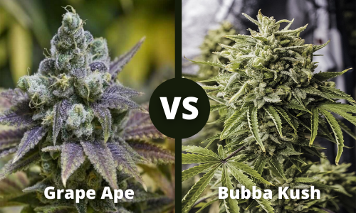 grape ape vs bubba kush