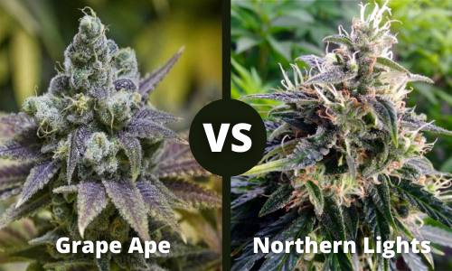 Grape Ape vs Northern Lights