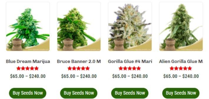 mj seeds canada strains
