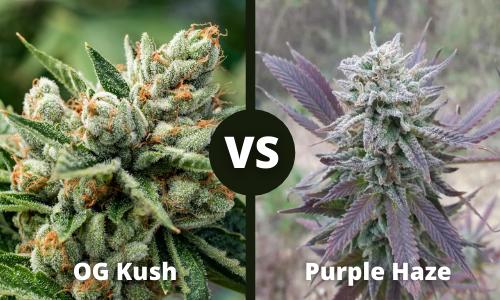og kush vs purple haze