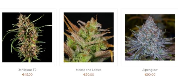 sannies seeds strains