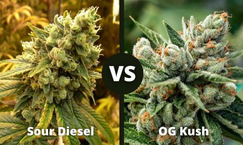 sour diesel vs og kush