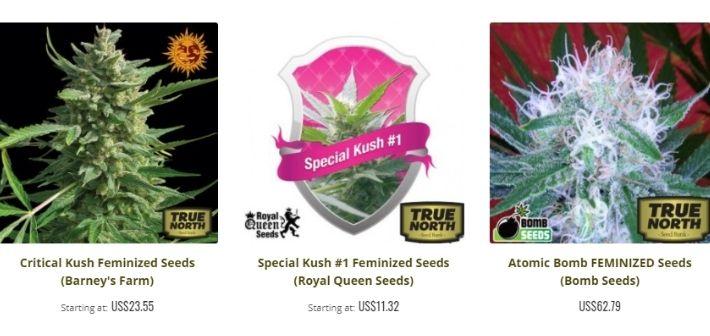 true north seeds strains