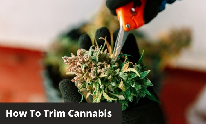 How To Trim Weed