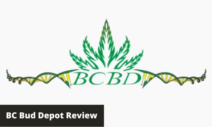 bc bud depot review