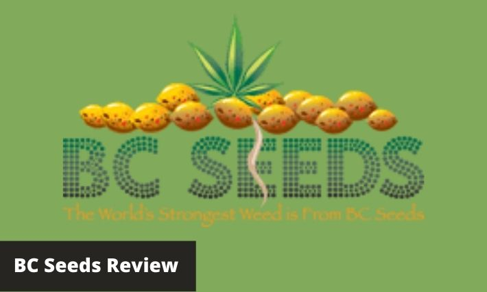 bc seeds review