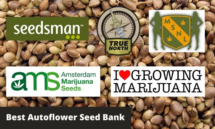 best autoflower seed bank