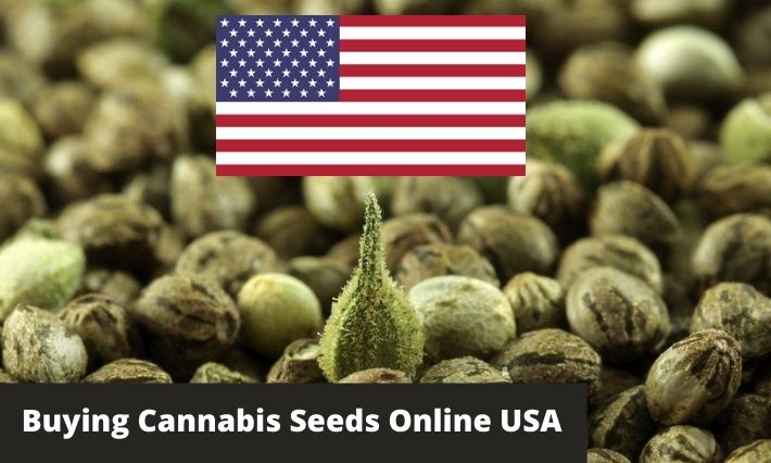 buying cannabis seeds online usa