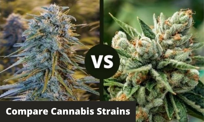 compare cannabis strains