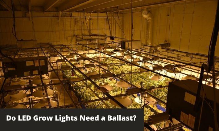 Do LED Grow Lights Need a Ballast