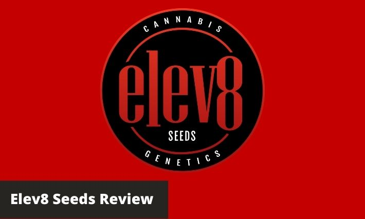 elev8 seeds review