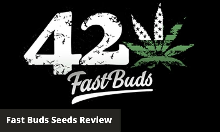 fast buds seeds review