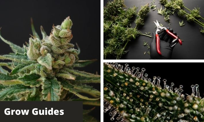 Grow Guides