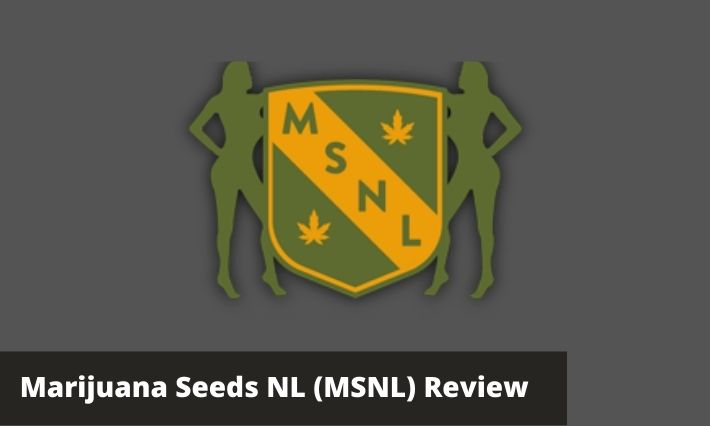 msnl seeds review