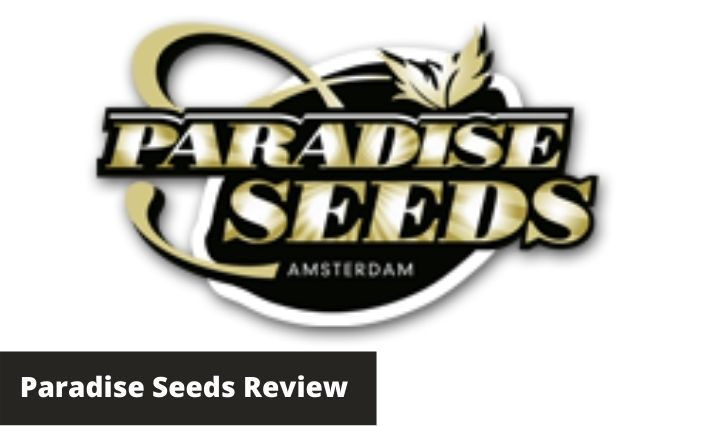 paradise seeds review