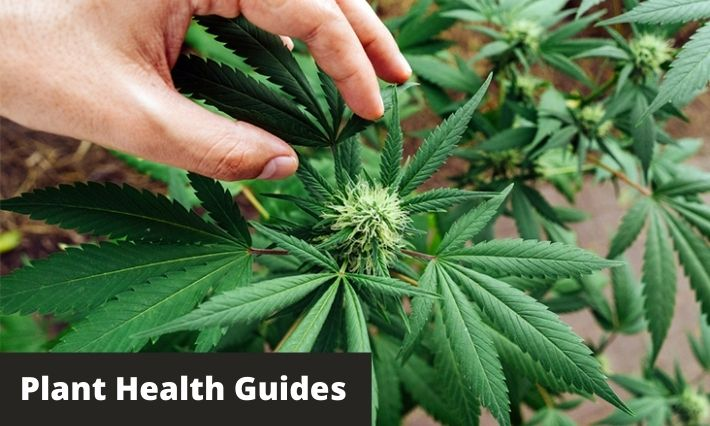 plant health guides