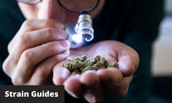 strain guides