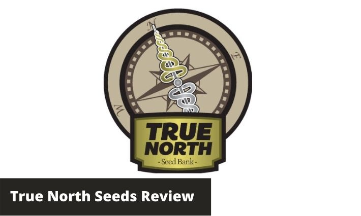 true north seeds review