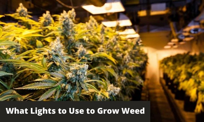 What Lights to Use to Grow Weed