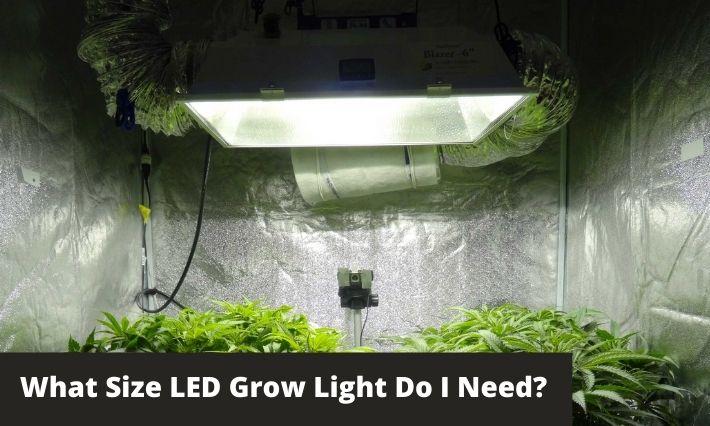 what size led grow light do I need
